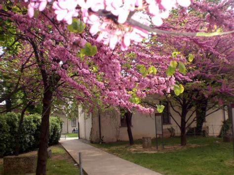 alberi fioriti giardino con alberi fioriti picture of milan s