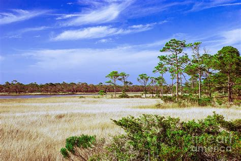beautiful landscape between apalachicola bay and gulf of