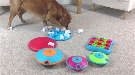 puzzle for dogs ottosson and petco partnering for bright minds treat puzzle toys for dogs