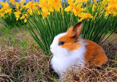 Kelinci Imut Lucu kumpulan gambar kelinci lucu dan imut dzargon gambar