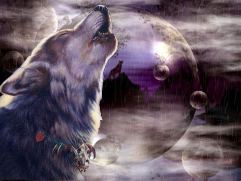 wallpaper for desktop wolf cool wolf backgrounds wallpaper cave
