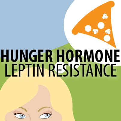 how to fix your leptin issues wellness mama simple what herb helps with leptin sensitivity exiire