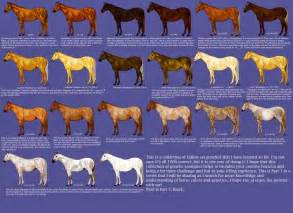 color of horses color charts
