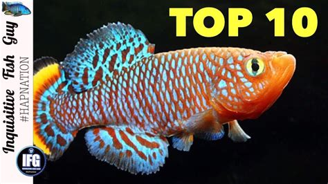 most colorful freshwater fish the top 10 ten most colorful freshwater fish in the