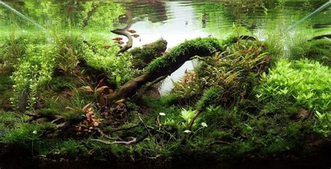 driftwood aquascape design 17 best images about driftwood aquascapes on pinterest