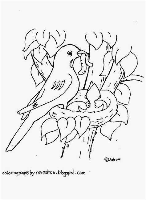 coloring pages of birds in a nest coloring pages for kids by mr adron robin in nest free