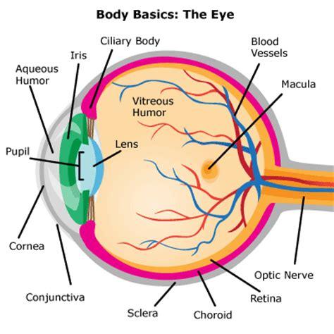 how does light pass through the eye eyes