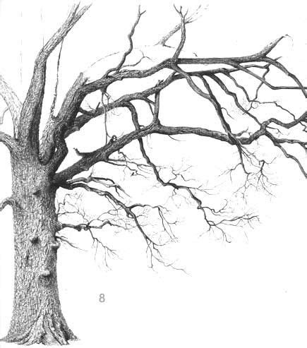 b tree drawing tool pen and ink drawings of trees this website teaches
