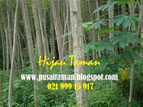 Obat Pelindung Tanaman jual pohon sengon jual tanaman pelindung tukang taman