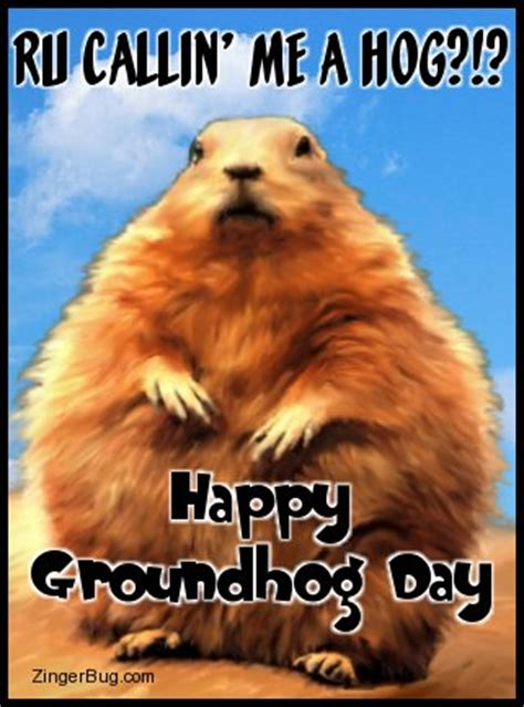 groundhog day slang meaning groundhog glitter graphic greeting comment meme or gif
