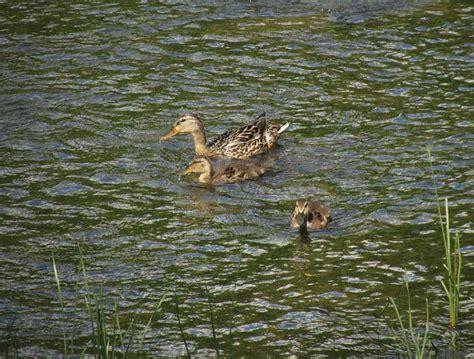 duck boat escape routes tour of province of quebec part 4 montreal