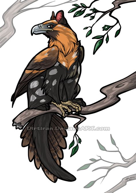 Griffin Feathers australian griffin by key feathers on deviantart
