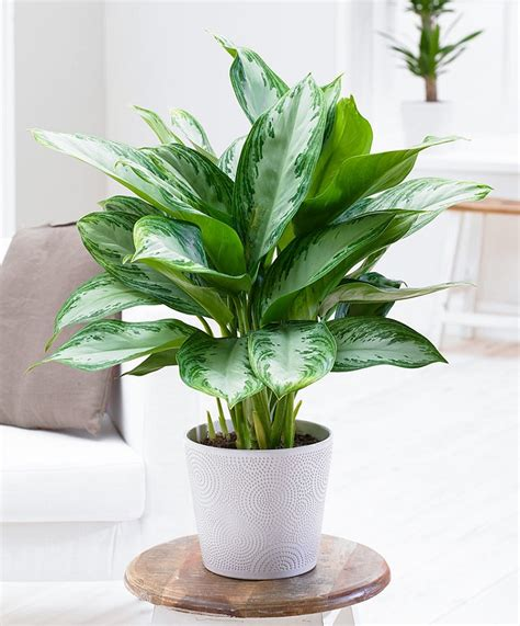 vasi da appartamento vasi per piante da interno moderni piante da interni vasi