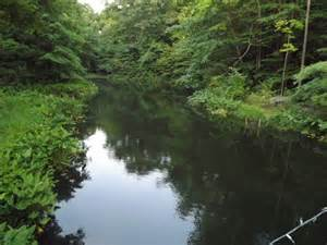 Backyard Fish Farm Natural Pond Pictures