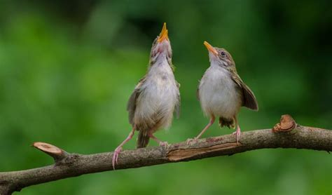 what is the dawn chorus mnn mother nature network