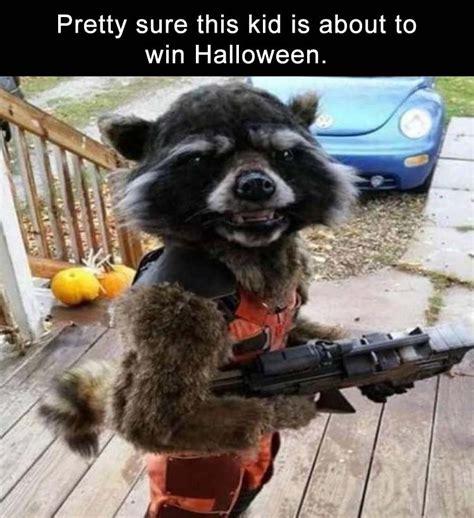 I Can Has Cheezburger Meme - ready for halloween i can has cheezburger