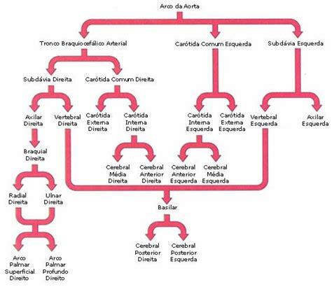 Sigma Imágenes Médicas S A | m 195 161 s de 25 ideas incre 195 173 bles sobre art 195 169 ria aorta en