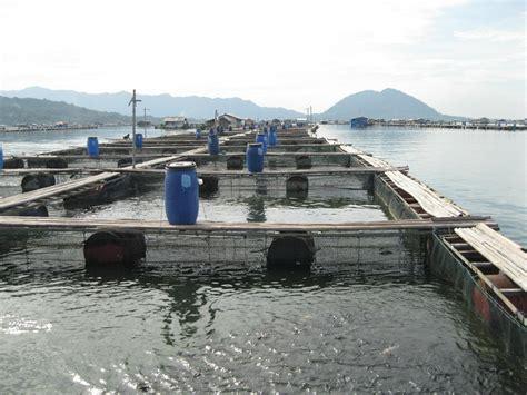 Jual Keramba Ikan Lele penerapan keramba jaring apung dalam budidaya info