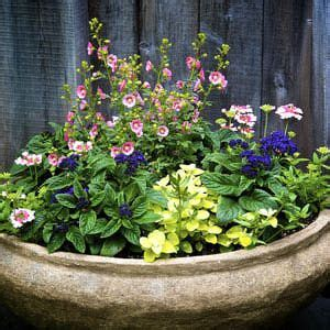 Large Pots For Outdoor Plants 1000 Ideas About Large Garden Pots On Outdoor