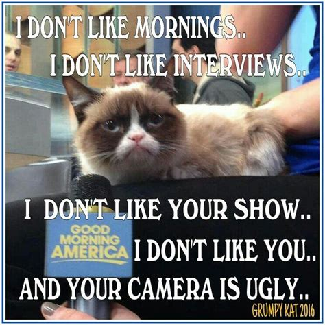 Kat Meme - 1266 best images about grumpy cat and pokey on pinterest