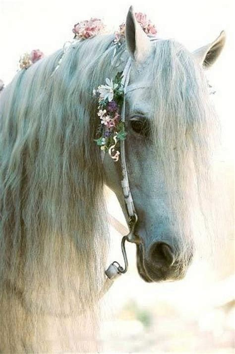 1000 images about horse party on pinterest horse 1000 images about really pretty horses on pinterest