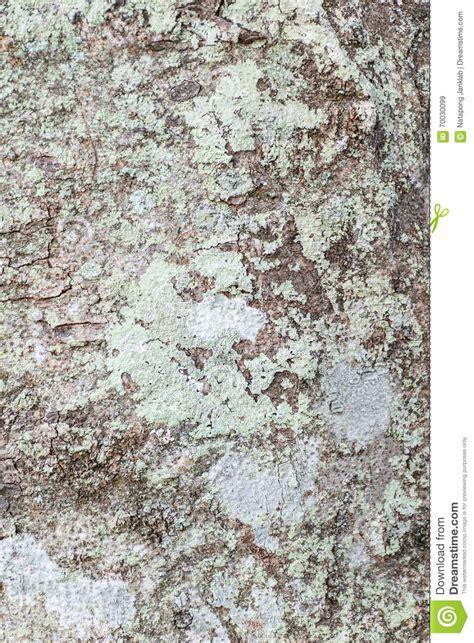 skin the color of bark tree bark texture stock photo image 70030099