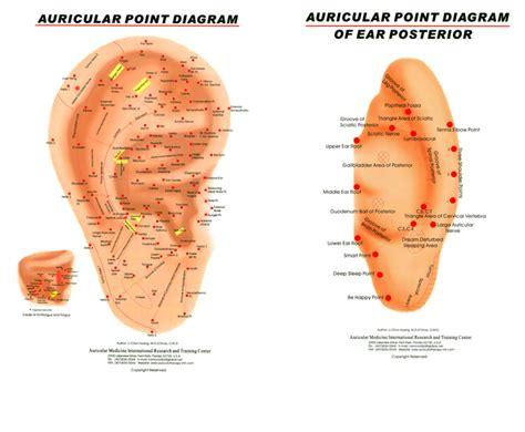 ear chart auricular chart right ear