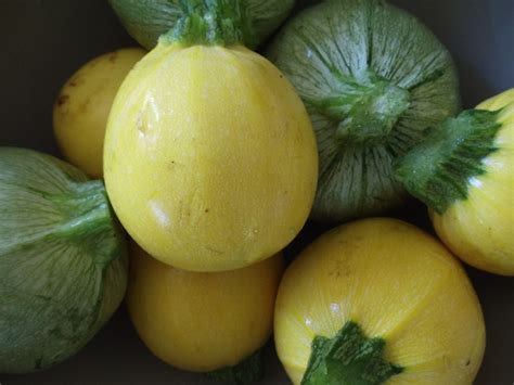10 summer squash varieties some you know some you don t