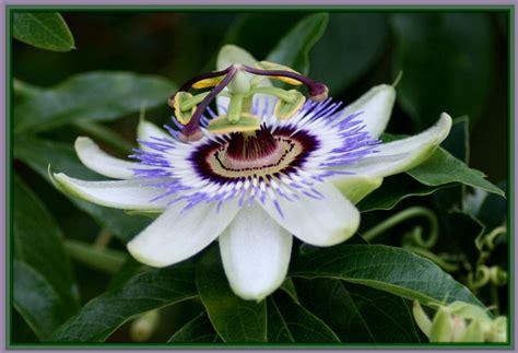 espectaculares imagenes de las flores mas lindas del mundo las 5 flores m 225 s bonitas del mundo