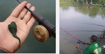 Senar Pancing Hcn umpan ikan nila mancing sungai arsip mancing ikan mania