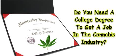 Do You Need A Degree To Do An Mba by Do You Need A College Degree To Get A In The Cannabis