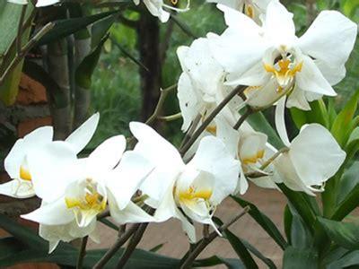 tanaman bunga anggrek tanaman bunga sepatu