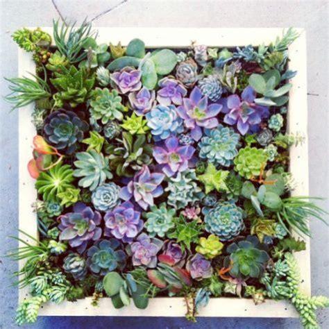 Succulent Frame My Farmscape - 304 best succulents images on plants cacti