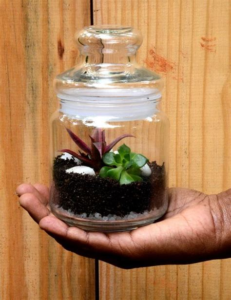 Enliven Planters by Cookie Jar Terrarium Mini Only For Bangalore Delivery