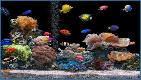 free screensavers tropical fish 3d screensaver 1 2 serial number 2017 fish