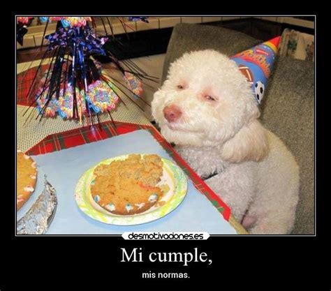 imagenes graciosas de cumpleaños con perros perro feliz cumplea 241 os buscar con google imagestxt