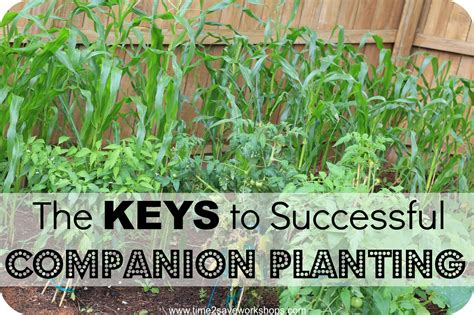 Pair Those Plants The Key To Successful Companion Planting Plants Vegetable Garden