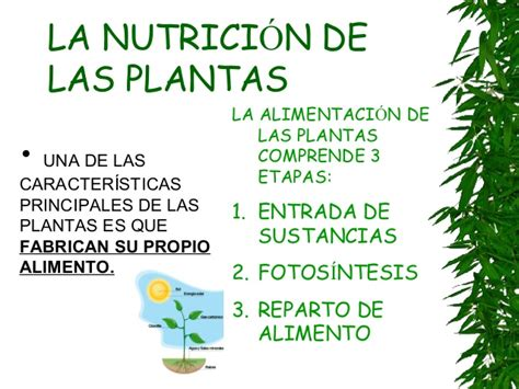fotosintesis de las plantas plantas