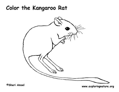 kangaroo coloring pages pdf kangaroo rat coloring page