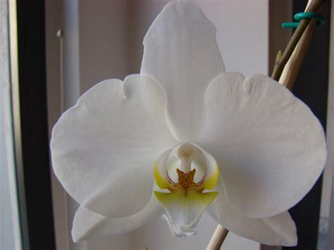 orchidea non fiorisce dea vegan ricette vegan vegane cruelty free