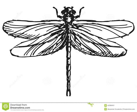 dragonfly stock vector image 42388401