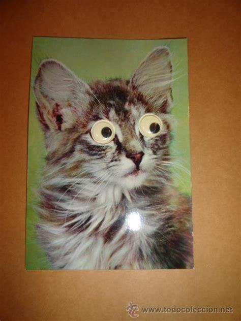 imagenes que se mueven gatos postal gato ojos que se mueven comprar postales