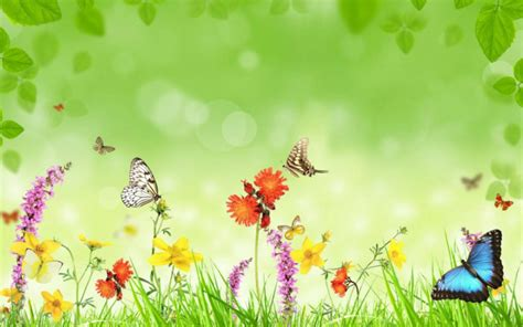 most beautiful images most beautiful flowers wallpapers hd flowers wallpapers