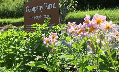 Gardener S Supply Warehouse Milton Vt Company Farm Update Growing Strong Despite The