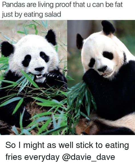 Memes De Pandas - pandas are living proof that u can be fat just by eating