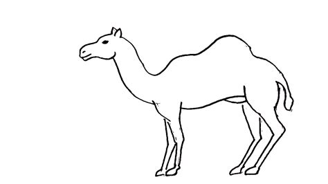 Drawing G by How To Draw A Camel In Easy Steps For Children