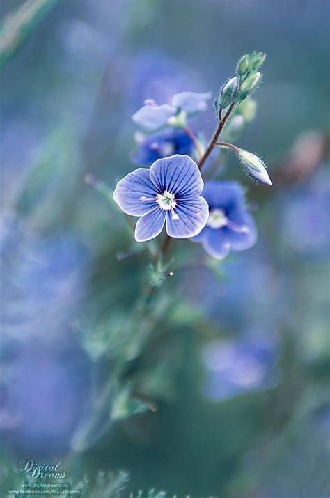 Garten Und Pflanzen 2307 by Persica By Norbert G On 500px яркие краски