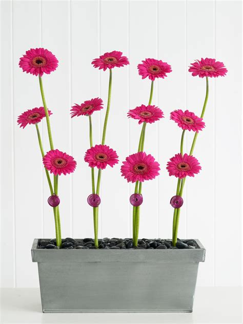 Hgtv Home Decorating Shows by Pretty Blooms All In A Row The Gerbera Line Arrangement