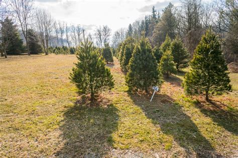christmas tree farms with real estate in monroe or carbon county pa 47 lancaster tree farm trees william penn real estate associates