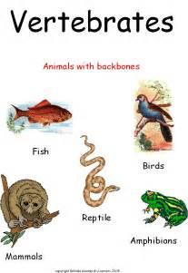 printable worksheets for vertebrate invertebrates carla